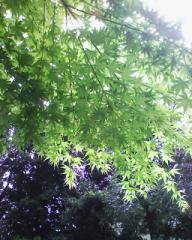 新緑の・・・